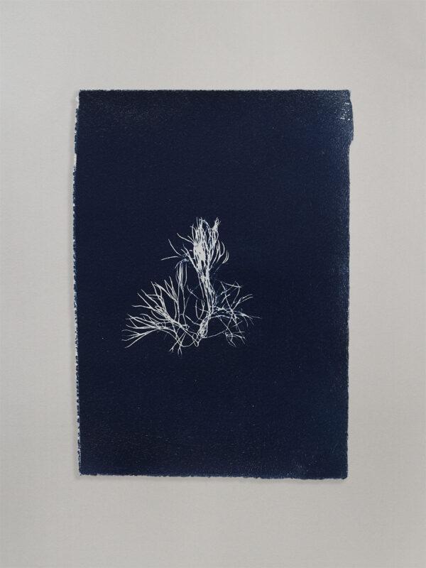 Anne Nowak - Blue Seaweed 01