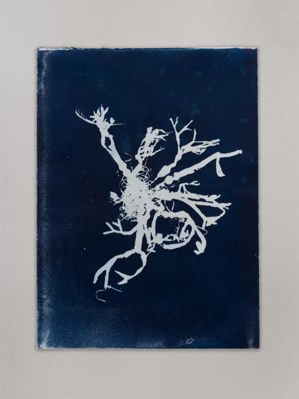 Anne Nowak -Blue Seaweed 06