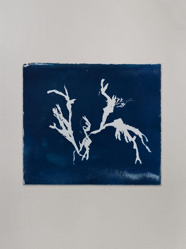 Anne Nowak - Blue Seaweed 04