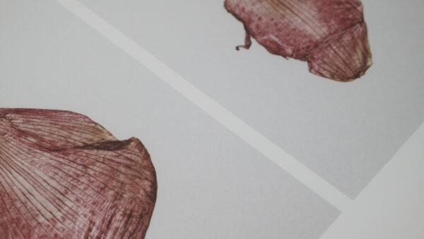 Kinfolk x Alium – Staffan Sundström, The Petal